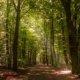 Umweltfreundlicher Fussboden